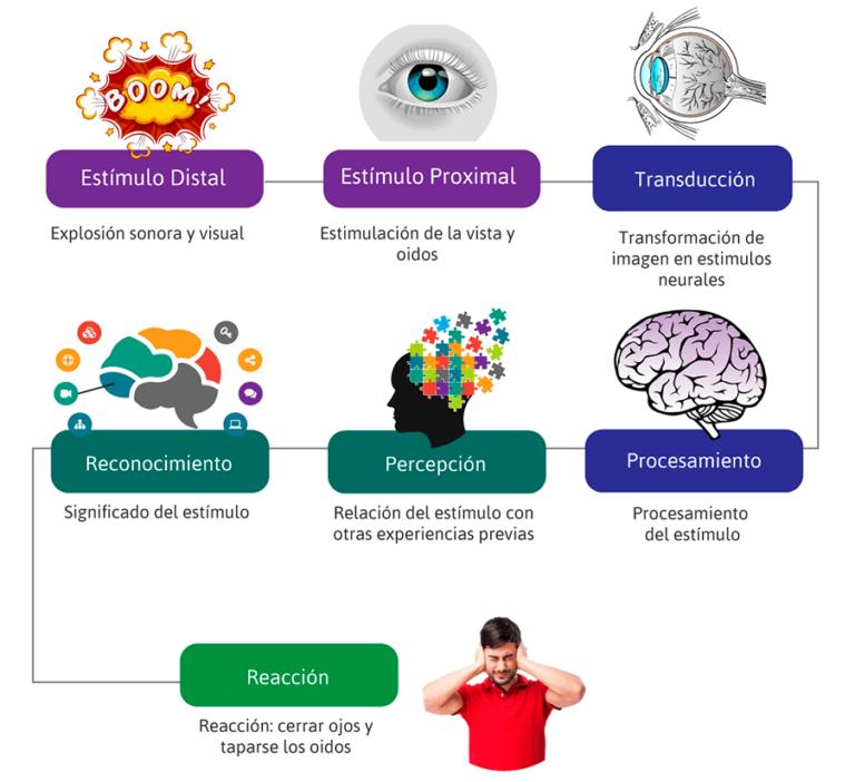 Ejemplo: Proceso de la Percepción sensorial y visual