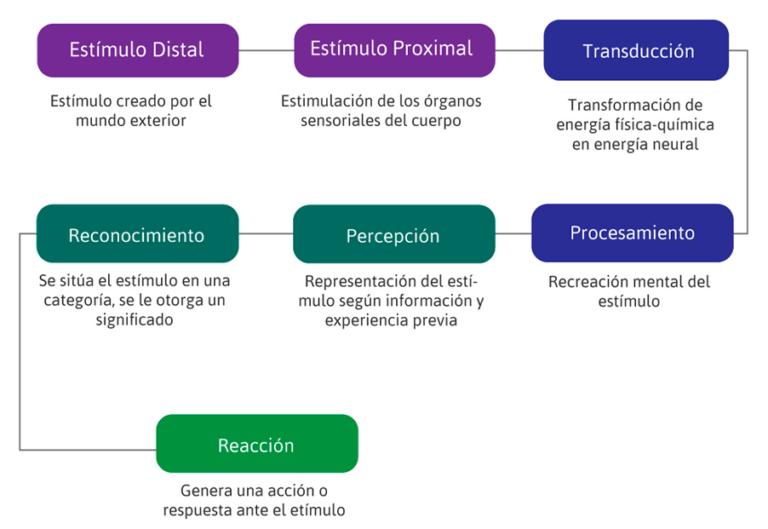 Proceso de la Percepción sensorial y visual